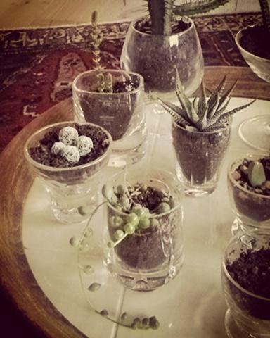 """""""Un Cactus in vetro ristretto…. grazie! """""""