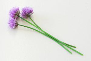 herbs-1323754-639x427