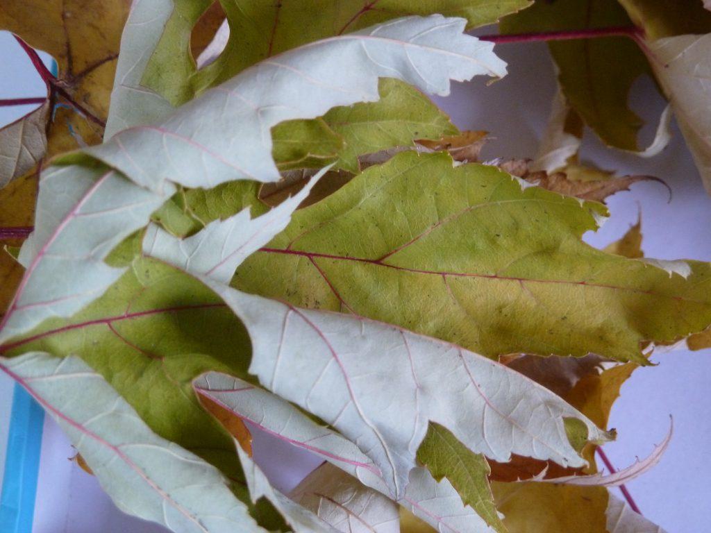....vale a dire ; ha preso le foglie secche, un legnetto, una base da un pezzo di tronco ....