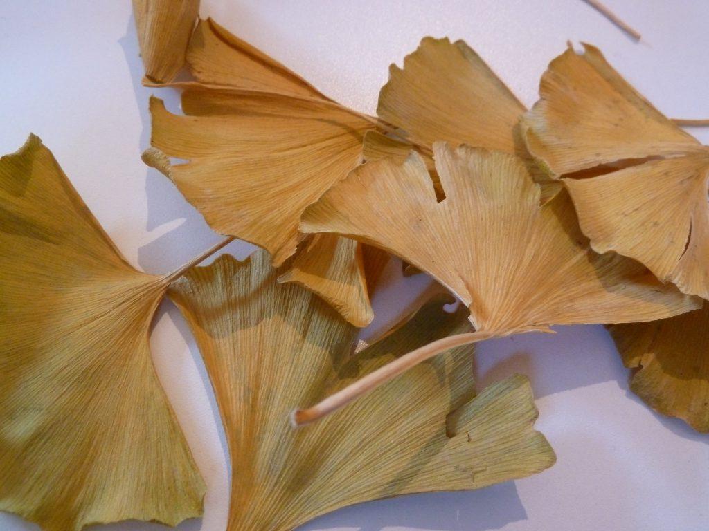 ...ho preso le foglie di Ginko...