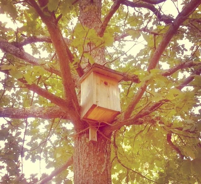 Come creare un Birdgarden ovvero un Giardino per gli uccelli